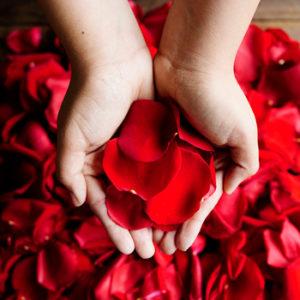 pétales rose rouge